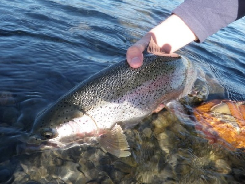 Idaho salmon river fly fishing guides