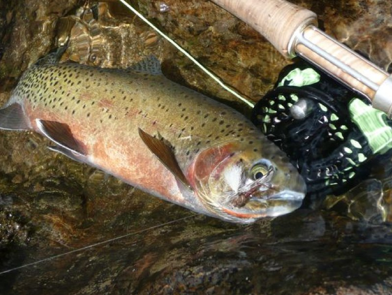 Cutthroat troat fishing in Idaho