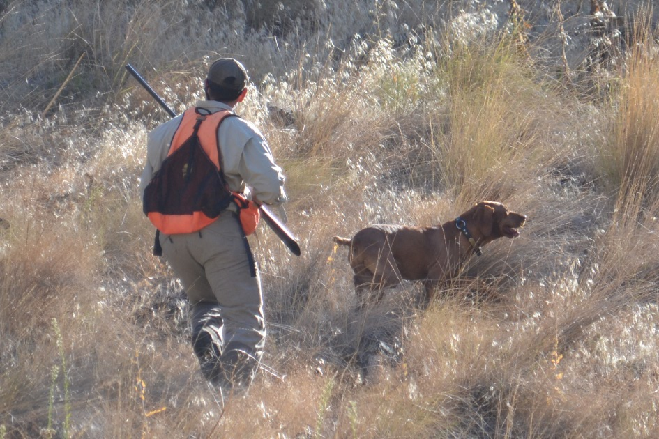 chukar hunting hells canyon