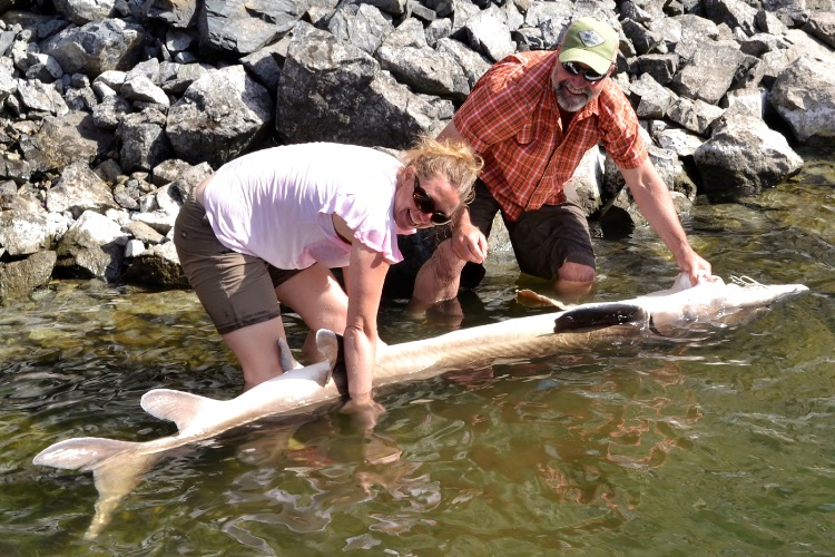 Hells Canyon Jet Boat Sturgeon Fishing Trips Snake River Bass